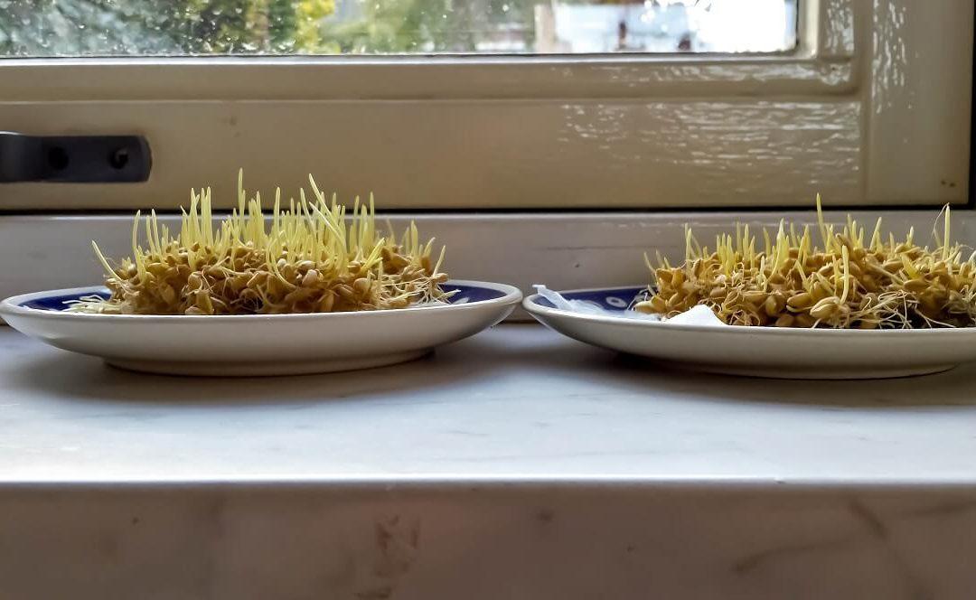 Kraan vitaliser en planten; een experiment